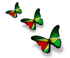 Three Guyana flag butterflies, isolated on white