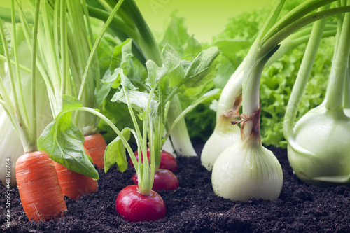 vegetables in the garden - 41860264