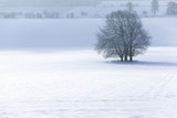 Isolated trees in snow covered landscape