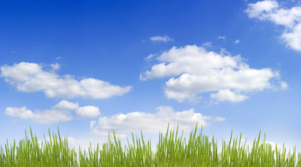 panorama of sky and grass floral concept background