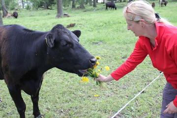 Kuh füttern 2
