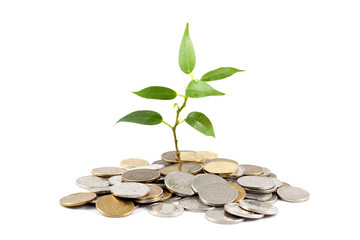 money concept with green plant