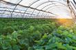 Leinwandbild Motiv Greenhouse