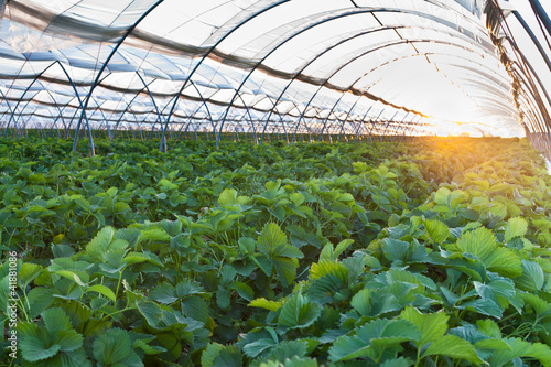 Greenhouse - 41881086