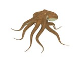 digital render of an octopus isolated on white