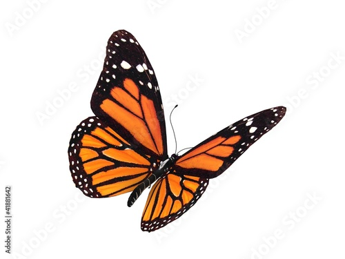 Deurstickers Vlinder digital render of a monarch butterfly
