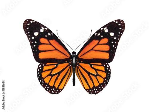 Deurstickers Vlinder digital render of a monarch butterfly