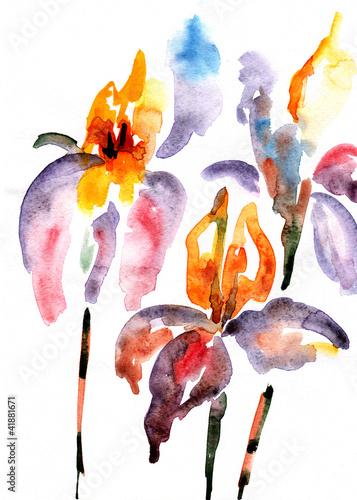 violet and orange irises