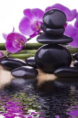 orchidea con pietre nere
