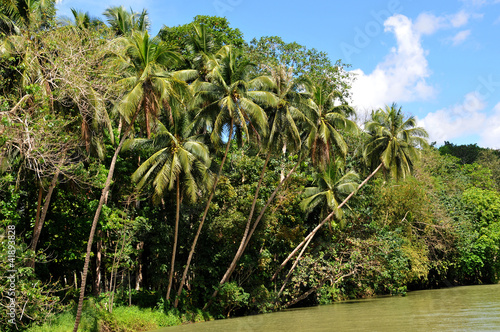 Landschaft am Loboc River