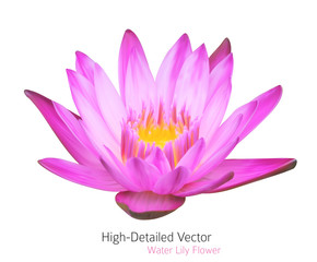 Vector Water Lily Illustration