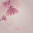 Fototapete Veilchen - Blume - Pflanze