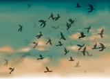 Birds Migration / Sky in the summer morning poster