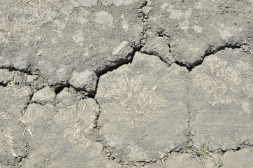 Dried cracked earth texture