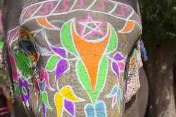 Close-up of elephant at annual elephant festival, Jaipur, India.