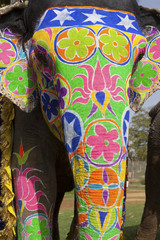 Decorated elephant at annual elephant festival, Jaipur, India.