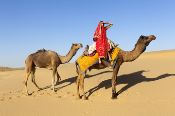 Woman in saree with her camels, Thar Desert, Rajasthan, India.