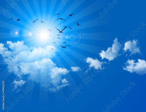 birds in blue sky