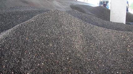 Loading of sunflower seed to the silo