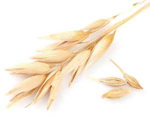 Ear of oats with grain