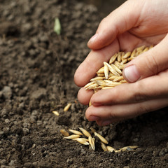 children hand sowing seed