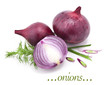 Set of onions on a white background