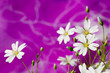Постер, плакат: яркие цветы