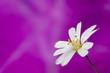 Постер, плакат: белый цветок