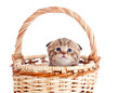 funny baby cat sitting in basket
