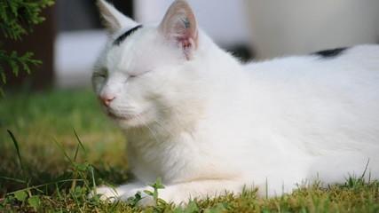 Liegende Katze im Garten