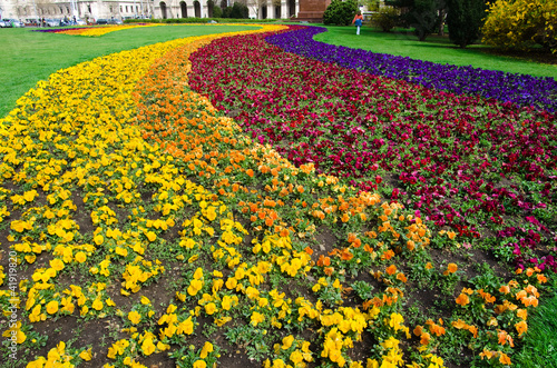 Colorful Flowerbed