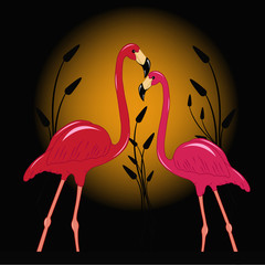 Two enamoured flamingos