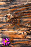 Textured Plywood poster