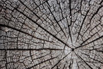 Tree cut.