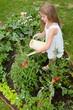 Vegetable garden - lovely girl watering plants