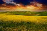 Fototapety Landscape and Meadows of Tuscany, Spring Season