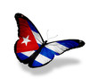 Cuban flag butterfly flying, isolated on white background