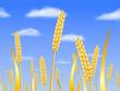 Champ de blé sur ciel bleu avec nuages blancs