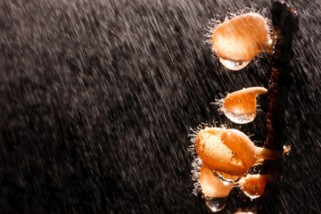 Orange mushroom on the  raining