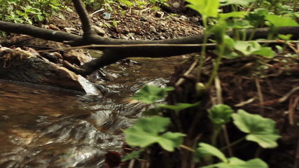 stream in a wood
