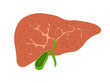 liver and gall bladder in the context