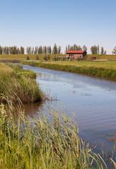 Dutch polder landscape in springtime