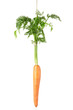 Carrot hanging by a string isolated on white