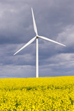 Wind turbine with rapeseed