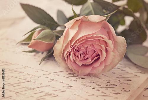 rozowa-roza