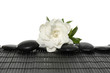 macro of white Gardenia flower with stones on mat
