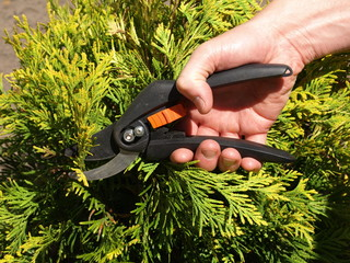 Cutting branches
