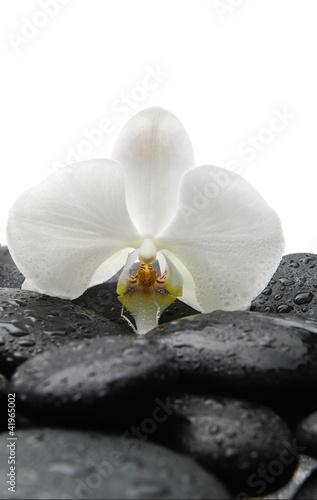 Fototapeten,aroma therapy,schönheit,schwarz,körper