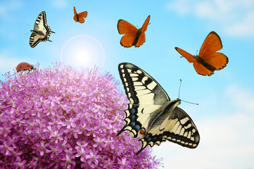 Blüte mit Schmetterlingen und Marienkäfer