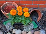 Transplanting Marigolds into pots poster